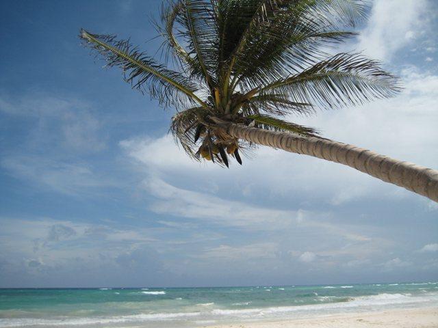 Karibik-Baby.jpg